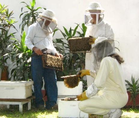 Taller y conferencias: el poder de las abejas curativas